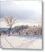 Winter At Scarborough Bluffs Metal Print