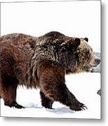 Winter Bear Walk Metal Print