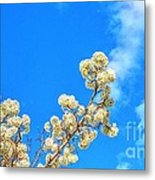 Winter Beauty Hdr Metal Print