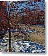 Winter Berries Metal Print by Baywest Imaging