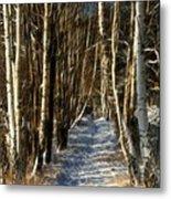 Winter Birches Metal Print