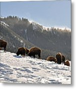 Winter Bison Herd In Yellowstone Metal Print
