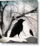 Winter Blackbirds Metal Print