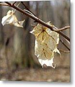 Winter Bleached Leaves Metal Print