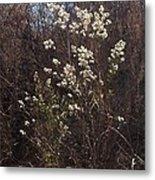 Winter Blossoms Metal Print