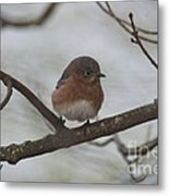 Winter Blue Bird 1 Metal Print