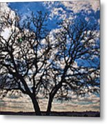 Winter Blue Skys Metal Print