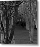 Winter Branches 1 Metal Print