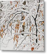 Winter Branches Metal Print