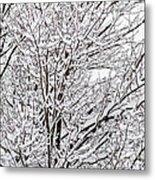 Winter Branches Metal Print