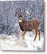 Winter Buck Metal Print by Darren  White