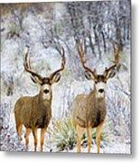 Winter Bucks Metal Print