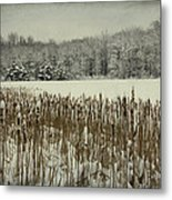 Winter By The Pond Metal Print