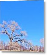 Winter Can Be Blue Metal Print