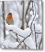 Winter Color Metal Print