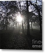 Winter Dawn Light Through Trees Metal Print