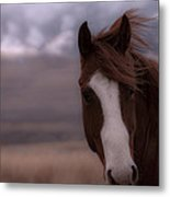 Winter Day On The Ranch Metal Print