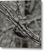 Winter Downy Metal Print