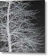 Winter Etching Metal Print