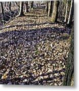 Winter Fall On The Trail Metal Print