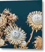 Winter Flowers Metal Print