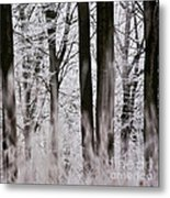 Winter Forest 1 Metal Print