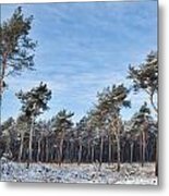 Winter Forest Covered With Snow Metal Print
