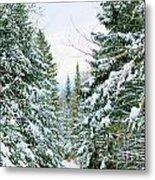 Winter Forest Landscape Metal Print