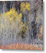 Winter Forest Landscape With Bare Trees Metal Print