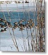 Winter Geese - 04 Metal Print