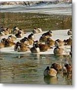 Winter Geese - 06 Metal Print