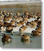Winter Geese - 07 Metal Print