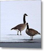 Winter Geese Metal Print