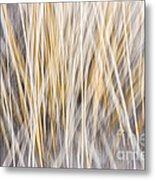 Winter Grass Abstract Metal Print