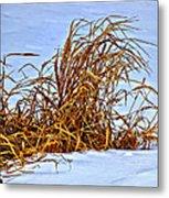 Winter Grasses II Metal Print