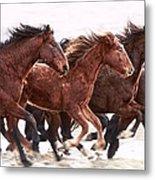 Winter Hardened Wild Horses Metal Print