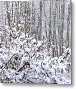 Winter Haven 2 Metal Print