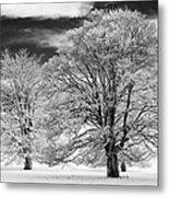 Winter Horse Chestnut Trees Monochrome Metal Print