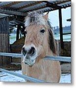 Winter Horse Metal Print