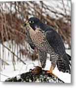 Winter Hunt Peregrine Falcon In The Snow Metal Print