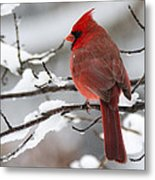 Winter In Red Metal Print