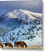 Winter In The High Desert  Metal Print by Jeanne  Bencich-Nations
