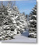 Winter In The Pines Metal Print