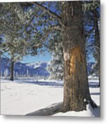 Winter In Yellowstone National Park Metal Print