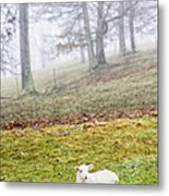 Winter Lamb Foggy Day Metal Print