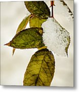 Winter Leaves And Snow Metal Print