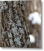 Winter Lichen Metal Print by Elizabeth Sullivan