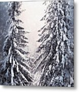 Winter Light And Tiger Metal Print