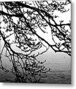 Winter Magnolia Metal Print