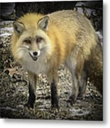 Winter Nature At Howell Nature Center Metal Print